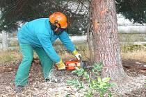 KÁCENÍ. Z lesů u Chebu zmizely vzrostlé stromy za zhruba 12 tisíc korun. Policie nyní čeká na odborné posudky, aby mohla pokračovat ve vyšetřování.