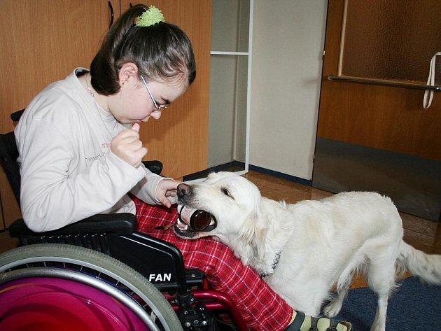 Asistenční pes je vycvičen speciálně pro potřeby klienta, v tomto případě Ivanky Řeřichové z Chebu.