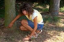 Zatím neznámý pachatel nařízl čtyři stromy u dětského hřiště v Chebu - Podhradu