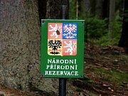 Na Jaroslavické rybníky v zimě občas zalétne i orel mořský.