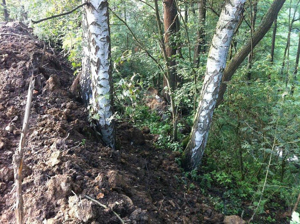 VZROSTLÉ STROMY v katastrálním území Ostroh jsou do výšky metru až metru a půl zasypány navážkou. Existuje riziko, že se z tohoto zásahu nevzpamatují.
