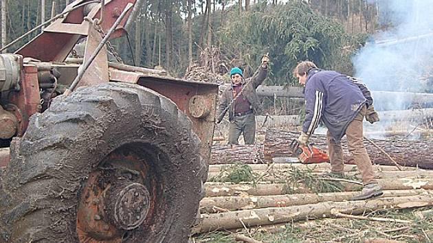 V lesích na Chebsku stále pokračují práce na odstranění kalamity