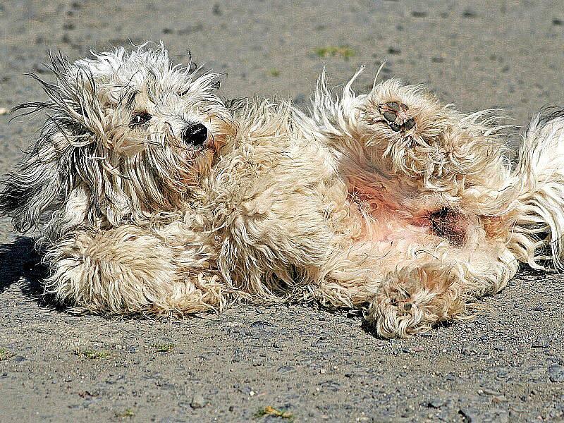 Barča je kříženec z chebského útulku. Nejlepší pes na světě, neskutečný mazel.