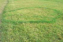 U Lázní Kynžvart se v trávě objevily záhadné kruhy. Podle vědců za to mohou houby.