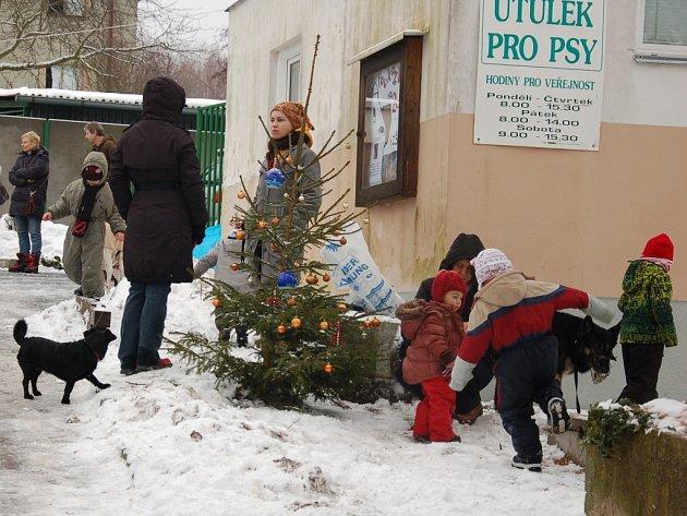 O svátcích vyvenčily opuštěné psy desítky lidí.