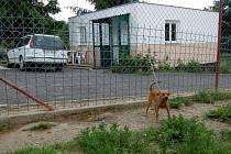 MĚSTSKÝ PSÍ útulek, stejně jako další neúřednické organizace, přejde od ledna příštího roku z města Cheb na příslušné subjekty.