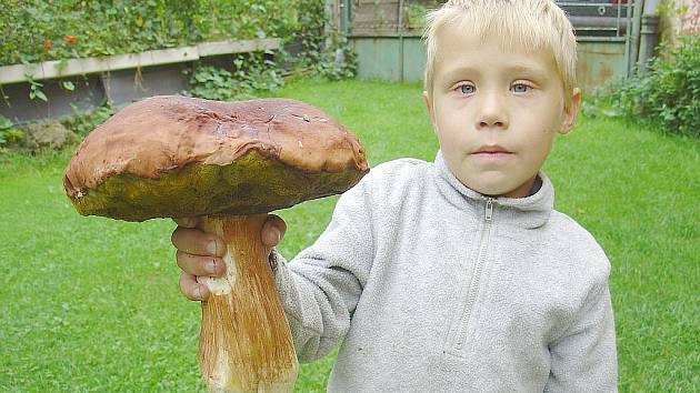 Ojedinělým hřibem borovým se pochlubil šestiletý houbař Matýsek z Chebu.