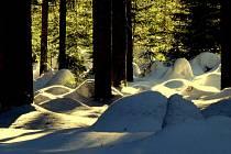 I studený zimní les umí vykouzlit teplé barvy