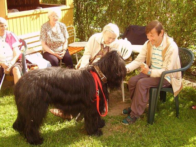 Jediný pes v Chebu, který úspěšně složil canisterapeutické zkoušky, je osmnáctiměsíční briard Jack.
