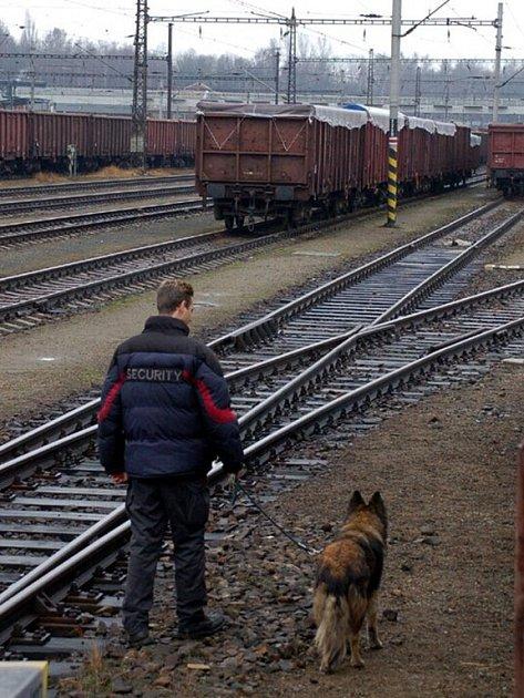 HLÍDKUJÍ MEZI VAGONY. Pracovníkům ochranky pomáhá hlídat odstavené vagóny i služební pes Monina.