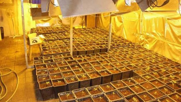 Kriminalisté během čtyř dnů odhalili v Chebu dvě pěstírny konopí.