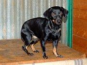 Na nové majitele čekají v Horní Hraničné i tři psí sourozenci