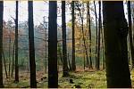 Příroda poblíž Lomničky. Les.