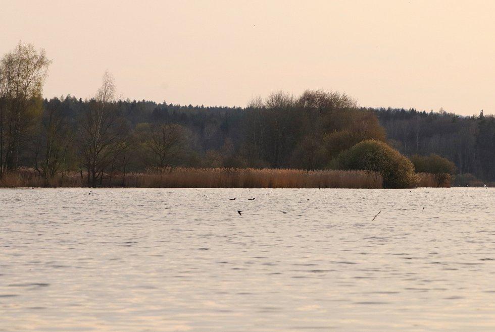 Přírodní rezervace Amerika u Františkových Lázní a někteří její ptačí obyvatelé.