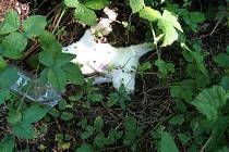 Králící nakažení myxomatózou, které strážníci objevili v Chebu - Podhradu