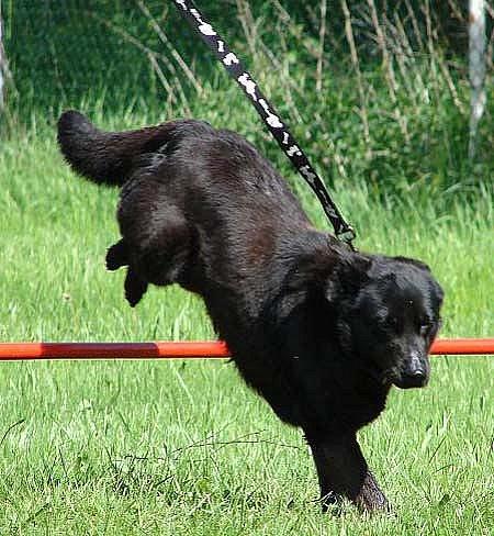 VOŘÍŠKIÁDA. V Chebu se uskuteční první ročník soutěže psů a jejich majitelů, přičemž nehraje roli být nejlepší, ale zúčastnit se.