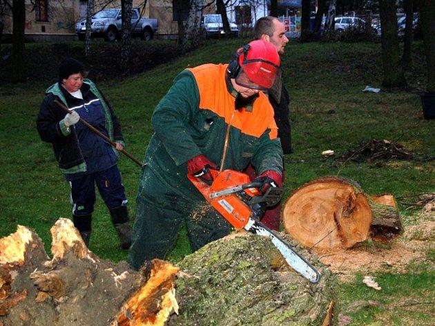 O STROMY SE MUSÍ STARAT vlastník pozemku, na kterém  rostou. Pracovníci odboru životního prostředí stromy v městských parcích pravidelně kontrolují. Špatné stromy nechají porazit.