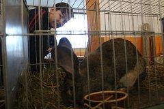 VÝSTAVA v Lipové u Chebu se setkala s obrovským zájmem veřejnosti. Lidé mohli vidět výstavní králíky, holuby a drůbež.