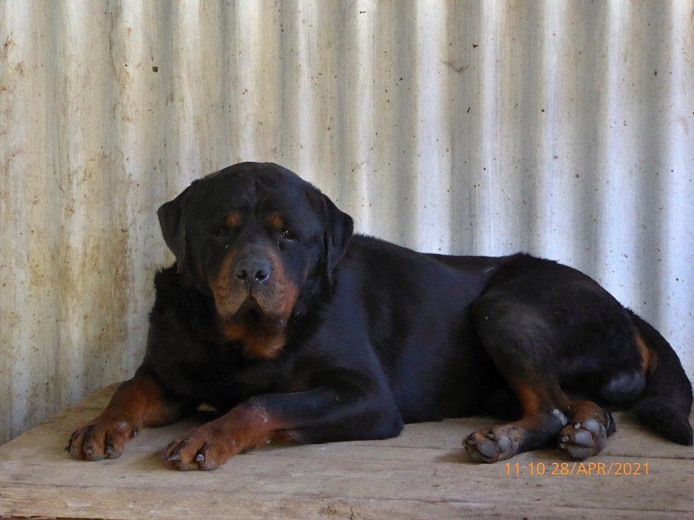 Odchycení psi čekají na nové majitele.