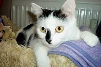 Naše kočička se jmenuje Madlenka a jsou jí 2 a půl roku.