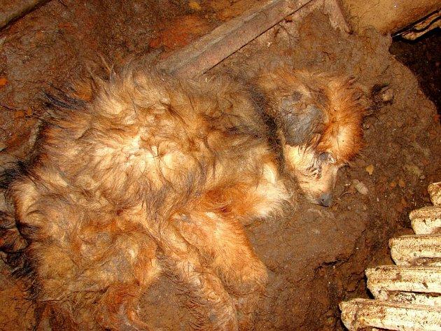 Dům v Kaceřově, kde veterináři našli týraného psa