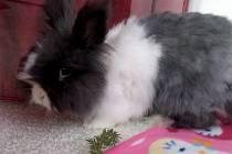 Náš mazlíček se jmenuje Davídek, je to dlouhosrstý králíček Teddy a ze všeho nejraději mlsá mrkvičku.