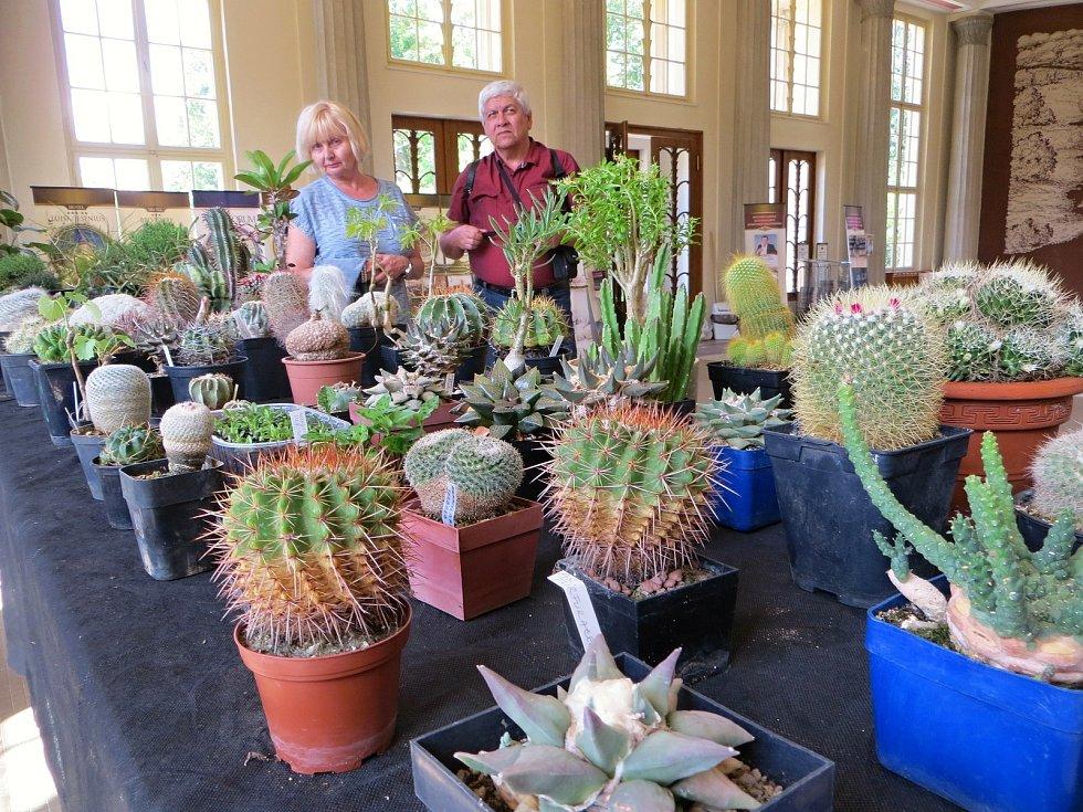 Jedinečná výstava 250 kaktusů a sukulentů byla k vidění ve Dvoraně Glauberových pramenů ve Františkových Lázních