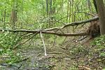Hasiče potrápil silný vítr. U Hazlova narazil vlak do stromu.