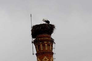 ČAPÍ PÁR se usídlil na komíně nad bývalou Hypernovou, jako každý rok.