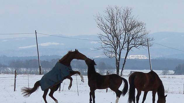 Jak s koňmi správně a bezpečně manipulovat a jak o ně pečovat. Nejen těmto dovednostem učí všechny zájemce chebský Jezdecký klub, který ve městě funguje už od roku 1972.