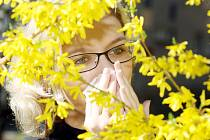 Ve vzduchu se se slunečným počasím objevuje čím dál více pylů. Aktuálně začala kvést bříza, ale problémy dělá astmatikům a alergikům i vrba jíva, která je v Karlovarském kraji zastoupena nejvíc.