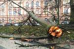 V městských sadech v Chebu větrová bouře Sabina zlomila strom a ulámala několik větví.