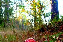 Ozdoba podzimních lesů.