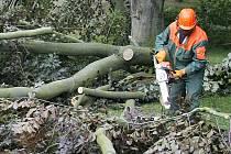 Kácení stromů je v Chebu ožehavým tématem. Za pokácené stromy však město kácí vždy stromy nové.
