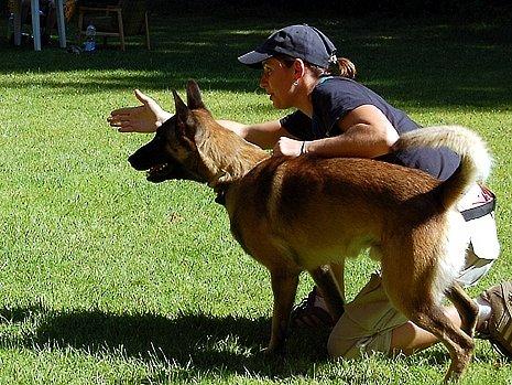 Názory na používání elektronických obojků při výcviků psů se různí