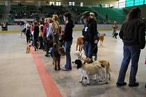 Na zimním stadionu se místo bruslařů proháněli psi