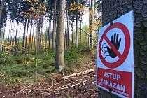Kvůli rozmnožení kůrovce, lesníci neustále provádí v lese kácení napadených stromů. Na některých místech městských lesů je tak vstup zakázán.