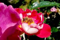 Pylová zrna už létají ve vzduchu.