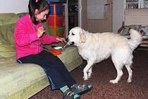 Podat třeba balíček kapesníků není pro asistenční fenku Beni žádný problém. Ivanka Řeřichová dostala od Pomocných tlapek psa připraveného takzvaně na míru.