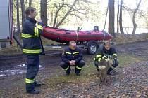 HASIČI, kteří vytáhli srnečka z rybníka nedaleko Lužné, měli podle čtenáře Deníku ze záchrany upřímnou radost.