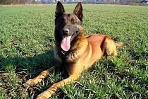 Služební pes bude už od jara příštího roku pomáhat chebským strážníkům.