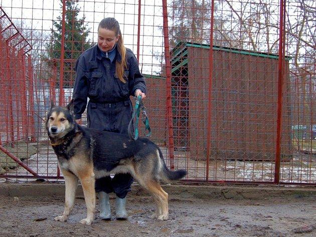 Don – sedmiletý německý ovčák. Je odměřený a nedůvěřivý, rozhodně se nehodí k dětem.