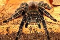 V chebském Produkčním centru Kamenná se konala výstava Svět pavouků.