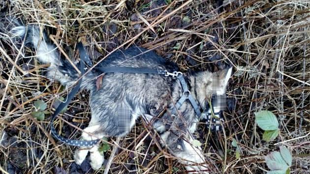 Mrtvé štěně