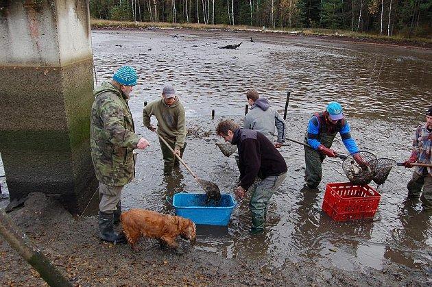 VÝLOVY RYBNÍKŮ jsou v plném proudu. O tomto víkendu se mohou milovníci ryb vydat do Aše či Skalné, kde rybáři chystají zajímavou podívanou. Ve čtvrtek a v pátek začíná s výlovem rybník Amerika ve Františkových Lázních. Snímek pochází z předloňského výlovu