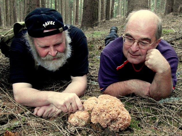 KOTRČ KADEŘAVÝ (nalezený v okolí Dyleně) potěšil vášnivé mykology Pavla Syřiště a Stanislava Nováka (zleva). Pomazlili se s ním i vleže na chladném ´lesním koberci´.