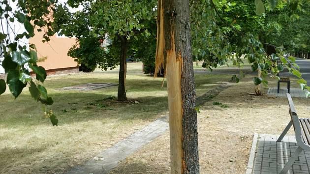 Už je jasné, kdo nejspíš stojí za zničenými stromy na chebském sídlišti Skalka.