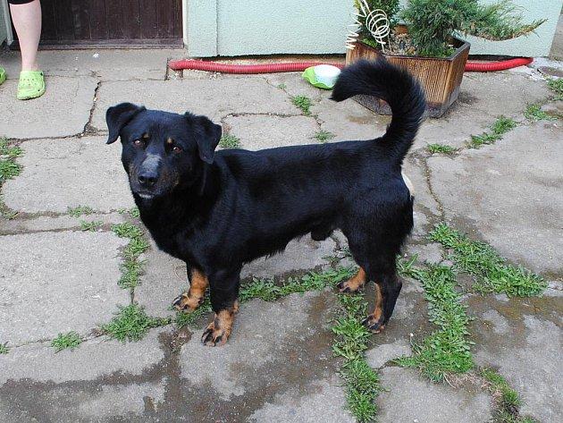 ASI DVOULETÉHO psa kdosi vyhodil v Lipové u Chebu z auta. Problém je v tom, že se o něj nikdo nechce postarat.