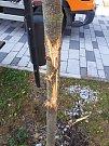 V posledních dnech někdo poničil mladé akáty a lípy vysázené na Masarykově náměstí v Hranicích u Aše.