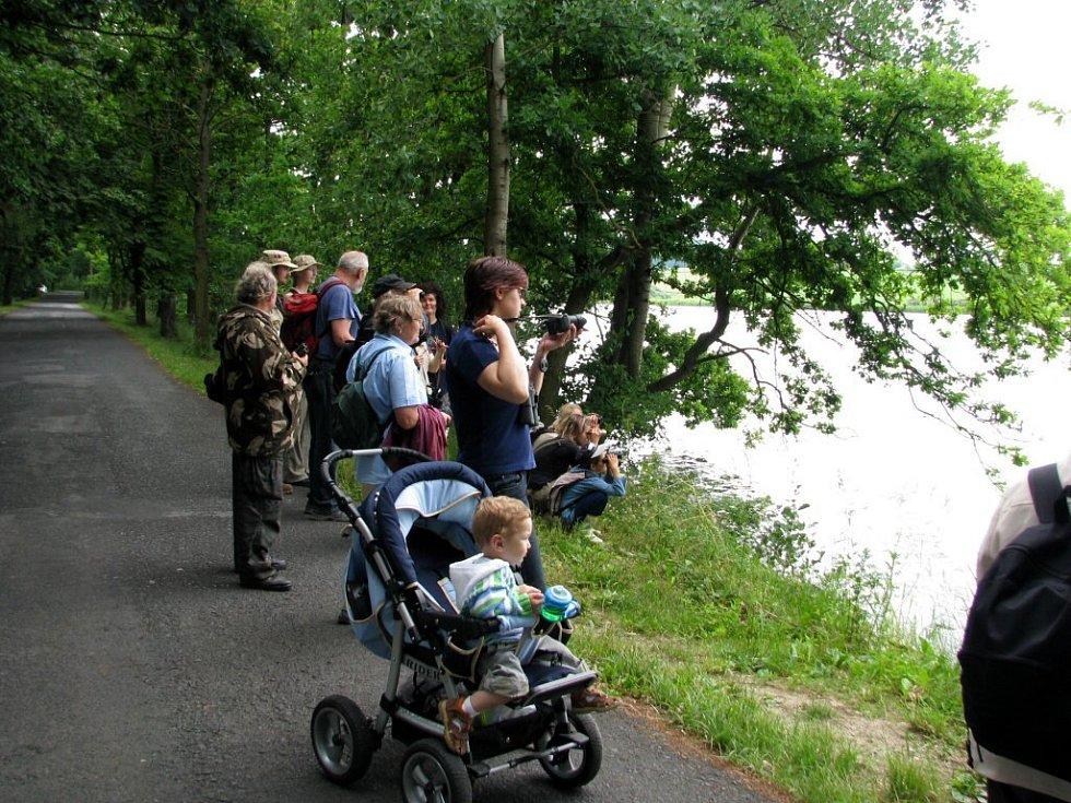 Ornitologická výprava na rybník Amerika u Františkových Lázní